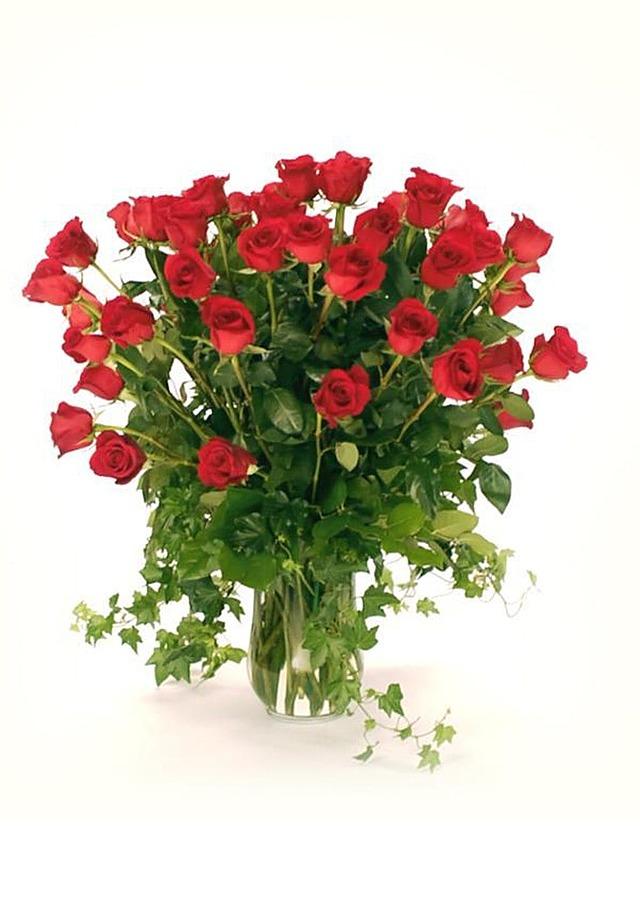 3 Dozen Long Stem Roses by The Flower Alley