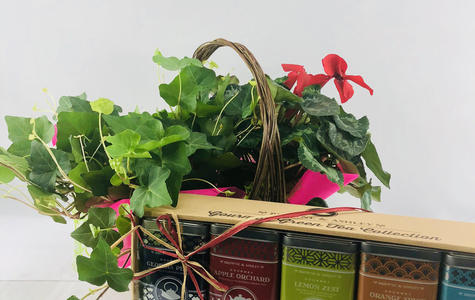 Display of Blooming Ivy Basket & Tea Gift Set by The Flower Alley