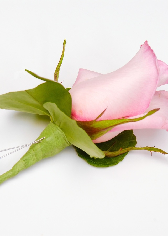 Display of Classic Light Pink Boutonniere by The Flower Alley
