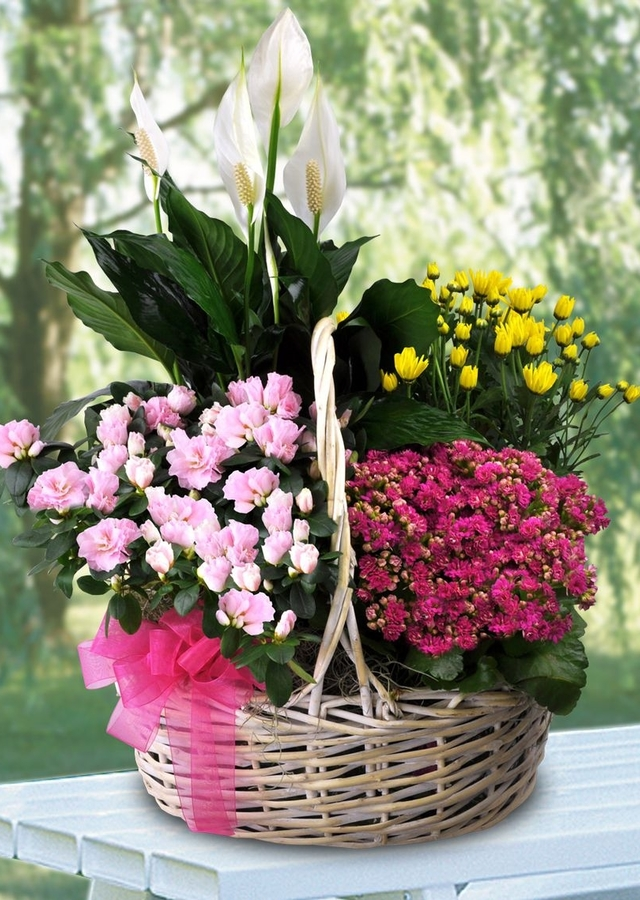 Display of Deluxe Blooming Basket by The Flower Alley