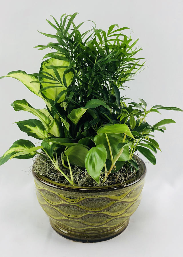 Display of Desk Top Green Planter by The Flower Alley