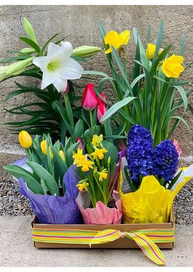 Display of Easter Bulb Box (medium) by The Flower Alley