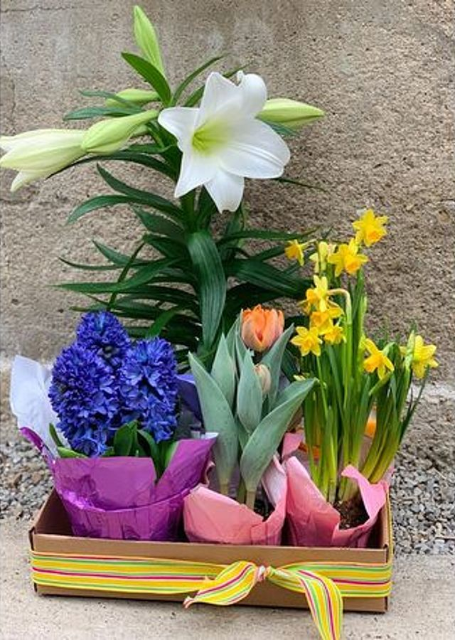 Display of Easter Bulb Box (Small) by The Flower Alley