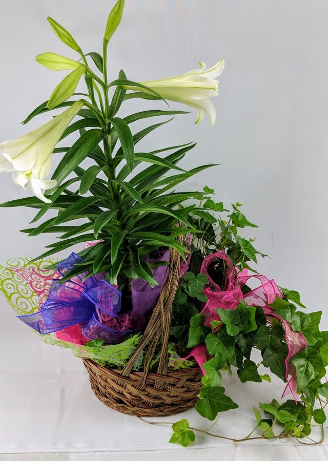 Display of Easter Lily & Ivy Basket by The Flower Alley