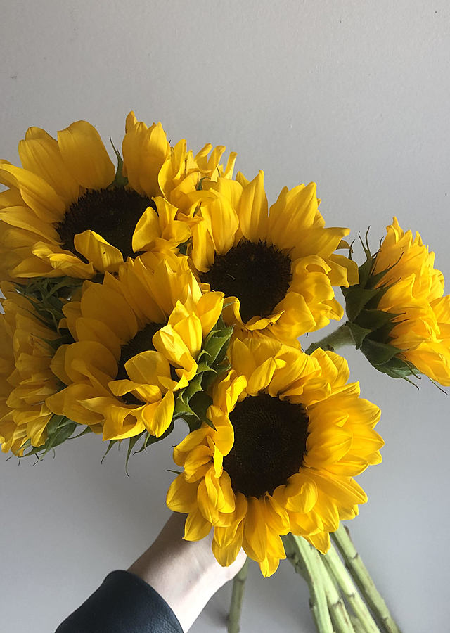 Display of Fresh Sunflowers (Pick Up Only) by The Flower Alley