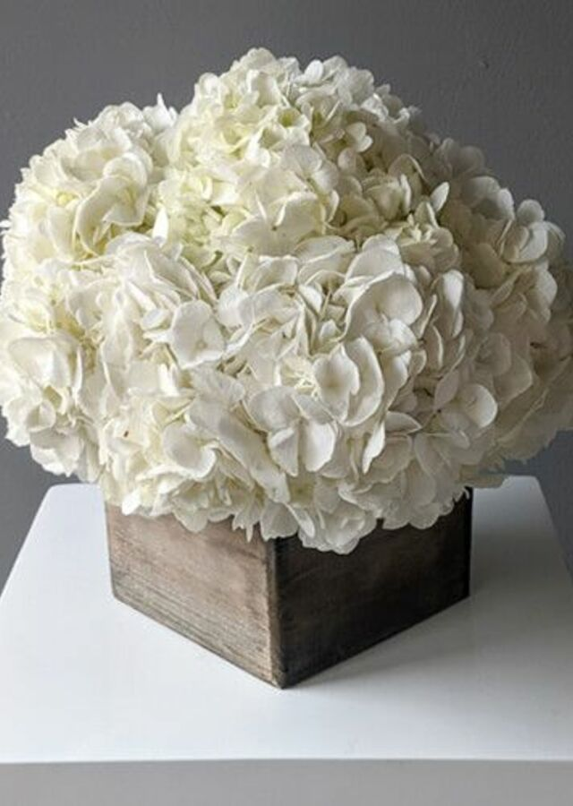 Display of Hydrangea: Large Centerpiece by The Flower Alley