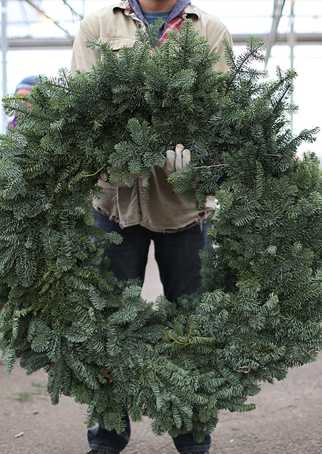 "Display of Noble Fir Wreath 50"", XL by The Flower Alley"