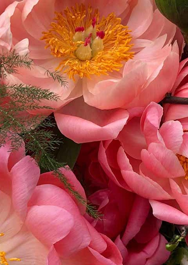 Display of Peony Club : Month of July by The Flower Alley