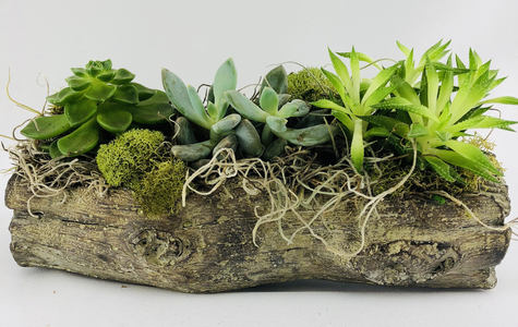 Display of Petite Succulent Garden by The Flower Alley