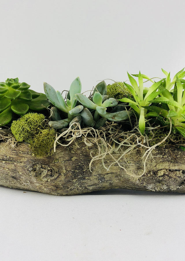 Petite Succulent Garden by The Flower Alley
