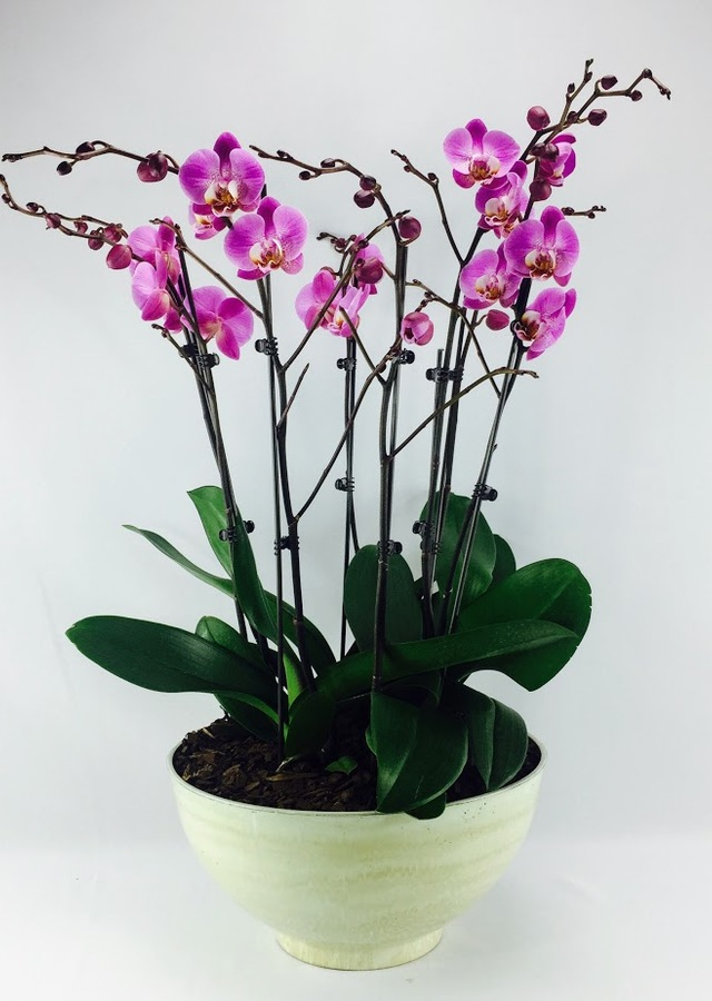Display of Purple Phalaenopsis Orchid by The Flower Alley