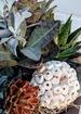 Succulent garden bowl thumb