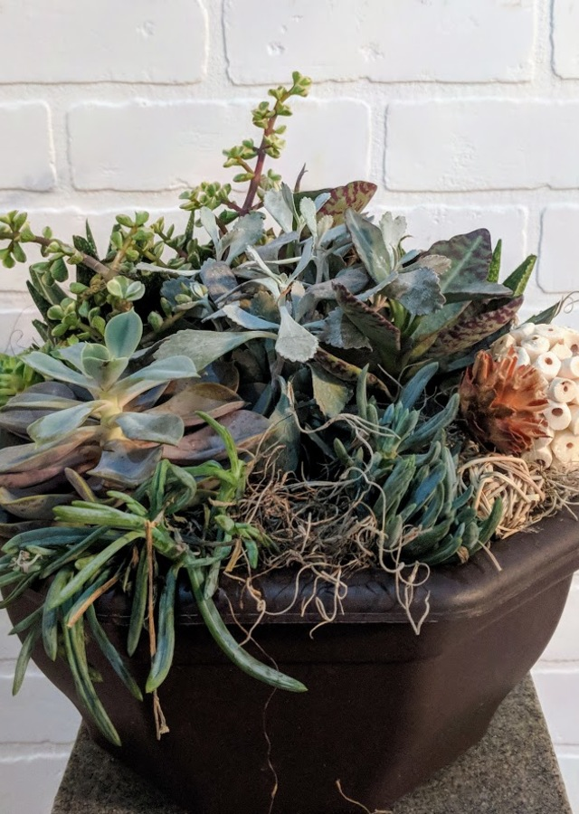Succulent Garden Bowl by The Flower Alley