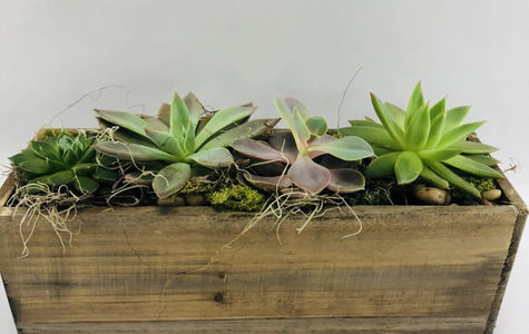 Display of Succulent Planter Box by The Flower Alley