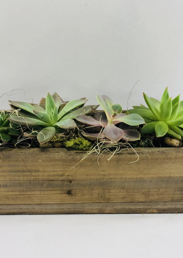 Succulent Planter Box by The Flower Alley