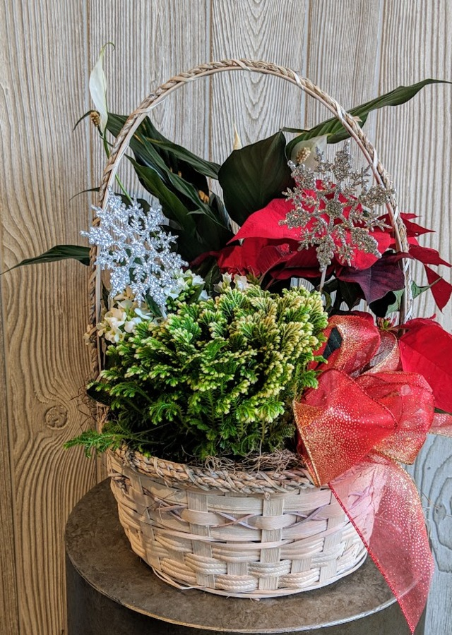 Display of Winter Delight Blooming Basket by The Flower Alley